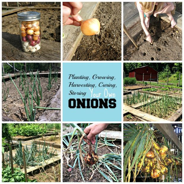 onion collage