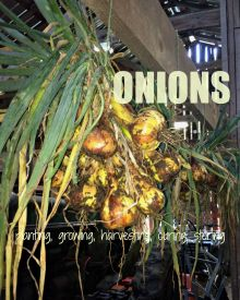 Onions – Everything You Ever Wanted to Know About Planting, Growing, Harvesting, Curing & Storing Fresh Onions
