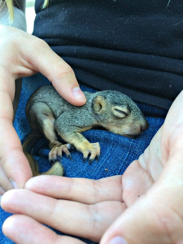 baby animals 7