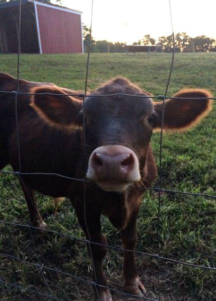 farm chores 16
