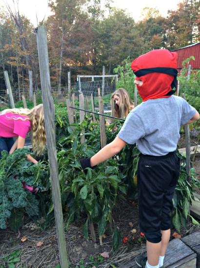 fall garden 10