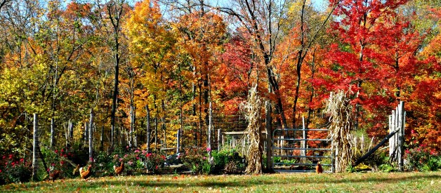 4 Fall Traditions to Start on your Homestead