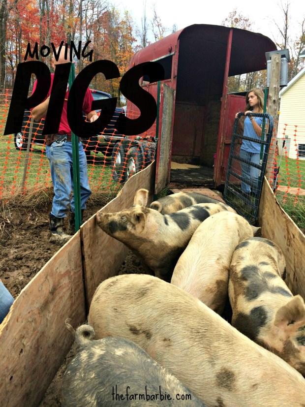 pig move 8