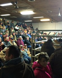 Should You Buy Livestock from Sale Barns?