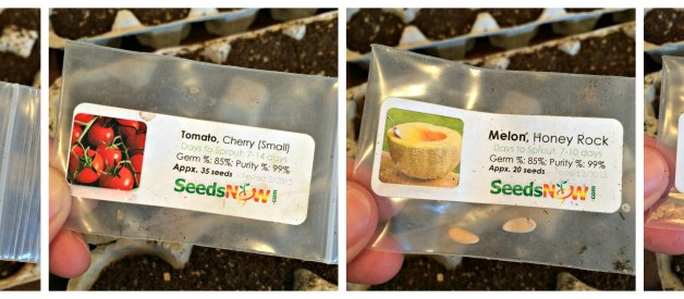 Start Your Seeds Indoors #2 – Planting the Seeds