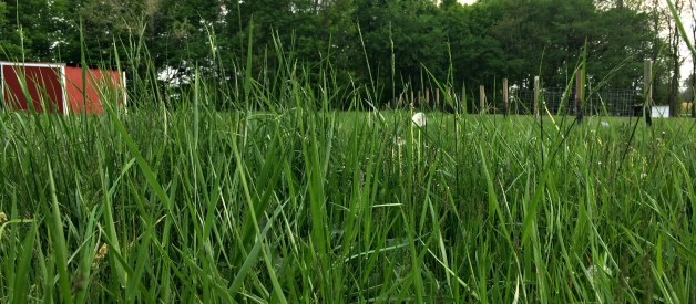 How and Why to Use Rotational Grazing