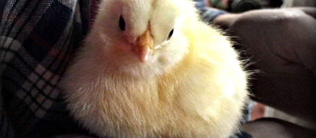 Easter Thoughts – No Bunnies, Chicks or Eggs… OK, Maybe Some Chicks  :)