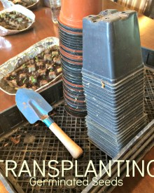 Starting Your Seeds Indoors #3 – Waiting and More Waiting