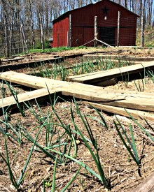 Garden! Garden! Garden!  See What's Growing in Kentucky