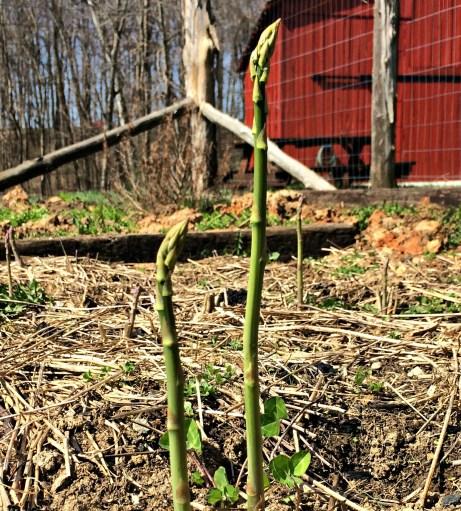 april garden 11