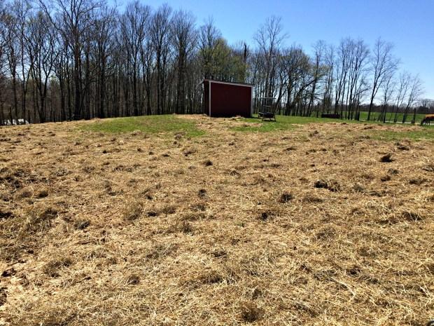 pasture repair10