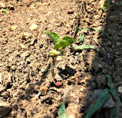 may garden 10