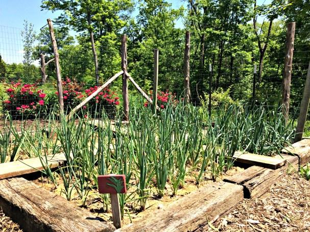 may garden 4