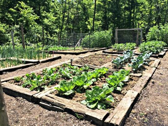 may garden 9