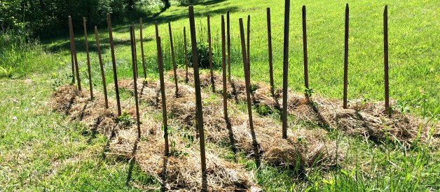 Will Crop Rotation Keep Your Tomato Plants Healthy?