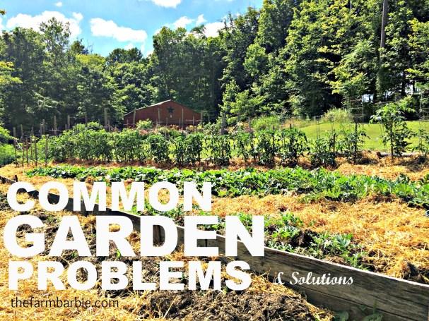 garden problems 1.22