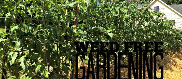 Weed Free Gardening – 3 Ways to Avoid Weeding