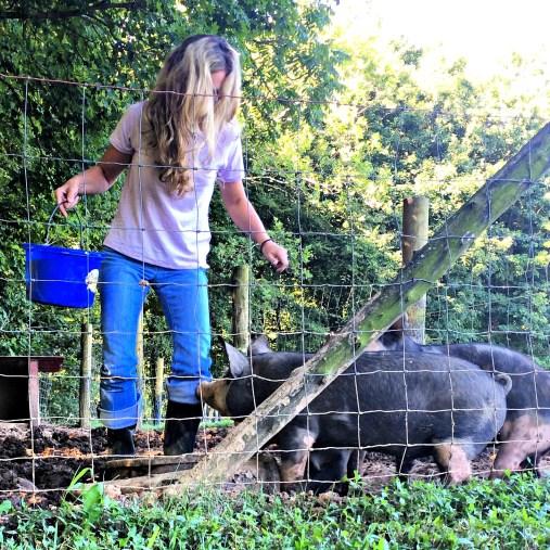 pigs-season-4-3