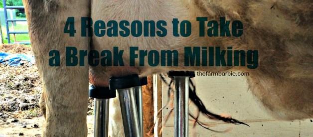 4 Reasons Dairy Cows (& their Owners) Take Breaks From Milking