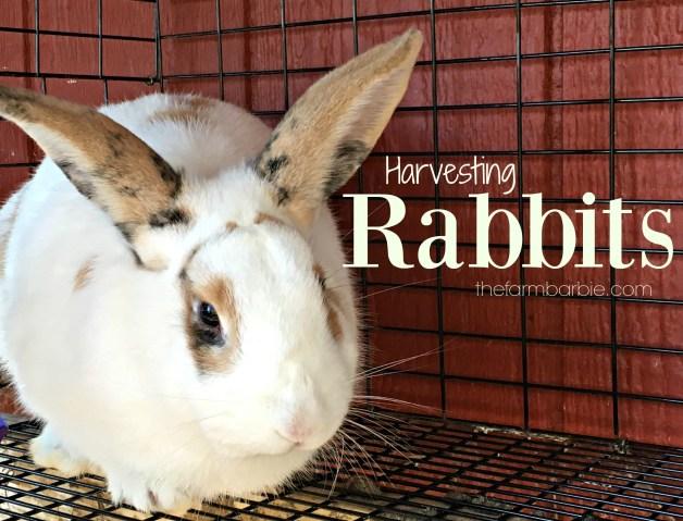 rabbit-kill-3-321
