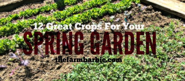 What Grows in Spring?  12 Crops For Your Vegetable Garden