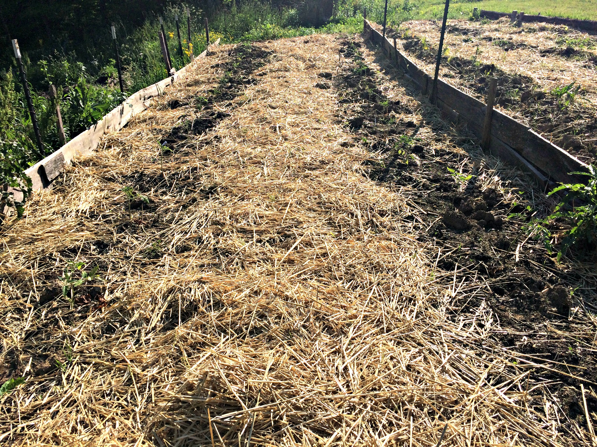 no more weeds!!! here's my secret to weed-free gardening – farm