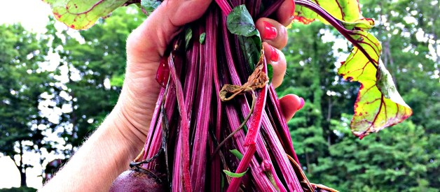 How to Grow Beets & Why You Should