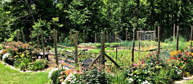 You Can Grow Your Own Food – Easy Vegetables for Your Garden