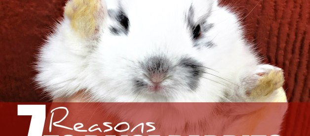 7 Reasons to Raise Rabbits