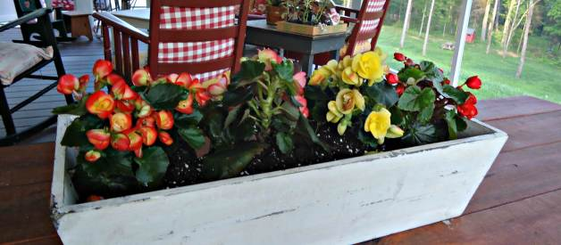 Garden Like a Master – Introduction to Container Gardening