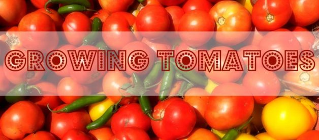 Garden like a Master:  Growing Your Best Tomatoes Ever (Premium)
