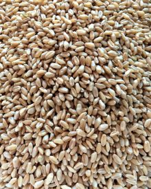 How to Buy Whole Grains (Premium)