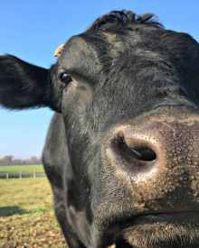 5 Reasons You Should Remove Manure from Pastures – Video (Premium)