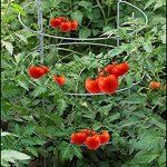 Dasco-Pro-TC-4-The-Big-EZ-Heavy-Duty-Folding-Tomato-Cage-and-Plant-Support-2-Pack-White-0-1