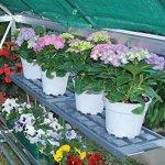 Shelf-Kit-for-Palram-Greenhouses-0-0