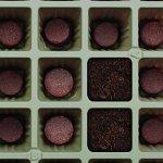 Burpee-91001C-32-Cell-Seed-Starting-Kit-Heat-Mat-10-x-20-0-1