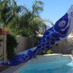Carp-Windsock-Koinobori-Blue-79-inch-KN005-0