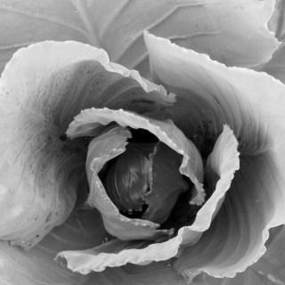 """Cee's Black & White Photo Challenge"""