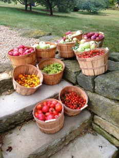 Apples from the Brown dog Farm orchard