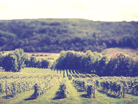 Benjamin Bridge winery