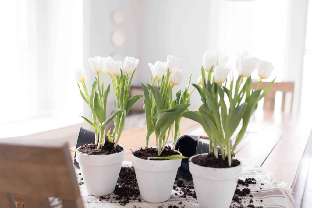 potted tulips for a simple farmhouse centerpiece