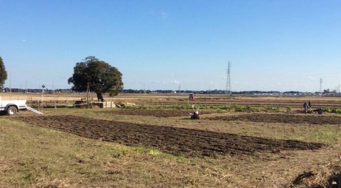 里三の畑を整備しました。