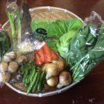野菜パックを発送しました(2016年5月29日)