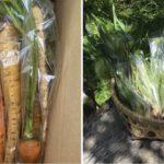 有野実苑野菜パック、山武応援野菜パックを発送しました。(2020年05月23日)