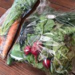 有野実苑野菜パックを発送しました(2020年06月14日)