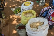 Different maize and millet varieties at Tot market, Marakwet