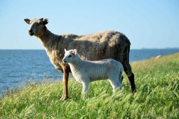 A-Z On How To Start Goat Farming Business