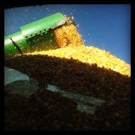 Corn filling a wagon