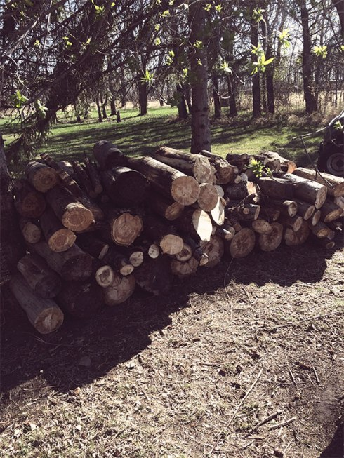 "Wood Pile (by Faye and ""Bertha"")"