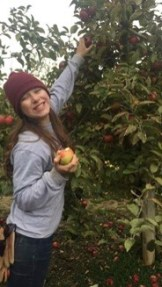 Apple harvesting at the farm's orchard.